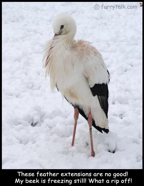Freezing Stork