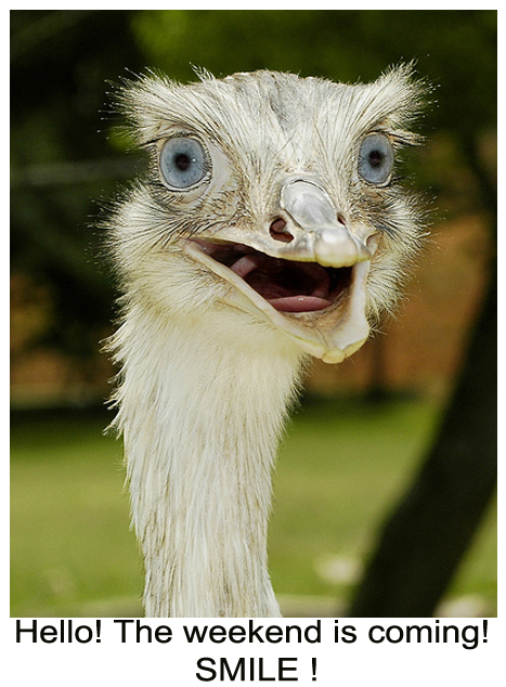 Happy Ostrich Weekend