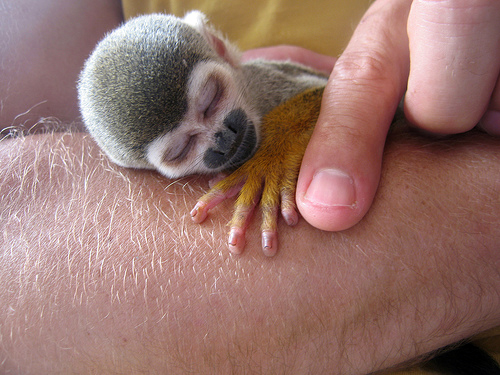 My Pet Baby Monkey