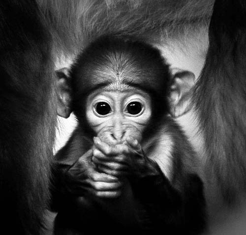 Cute Baby Monkey
