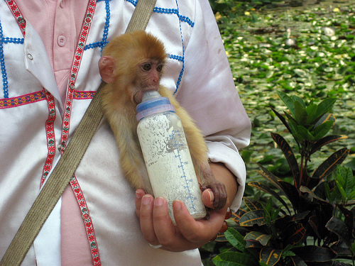 Baby Monkey in Xishuanbanna