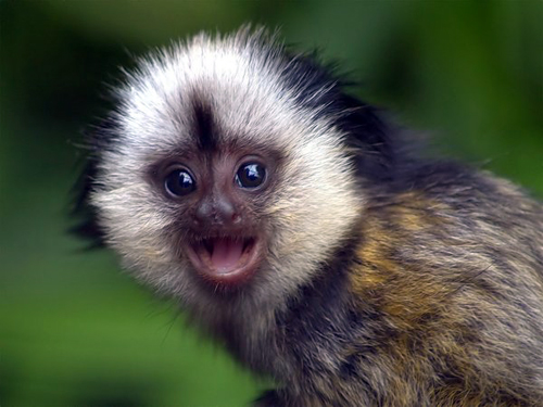 The 21 most adorable and cute baby monkeys in the world furry talk baby voltagebd Image collections