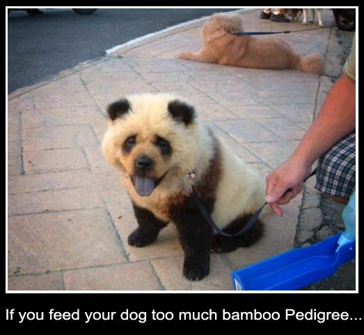 Odd Panda Dog