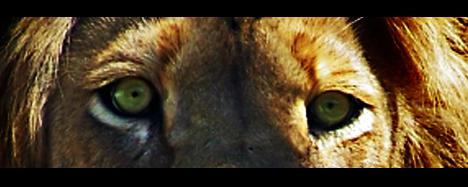 big cat10