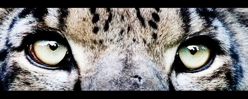 big cat11