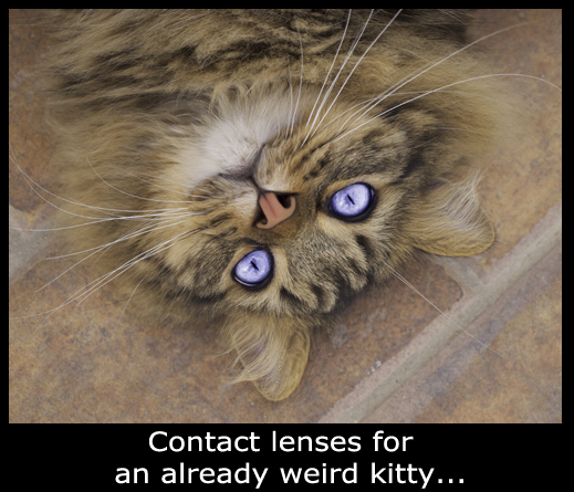 Contact Lenses Kitty - Purple Eyes