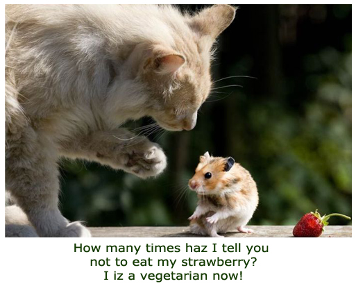 Animal Argue Over Strawberry