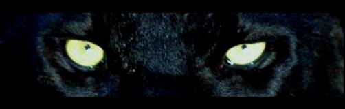 big cat5
