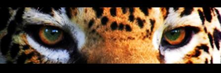 big cat6