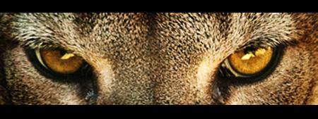 big cat9