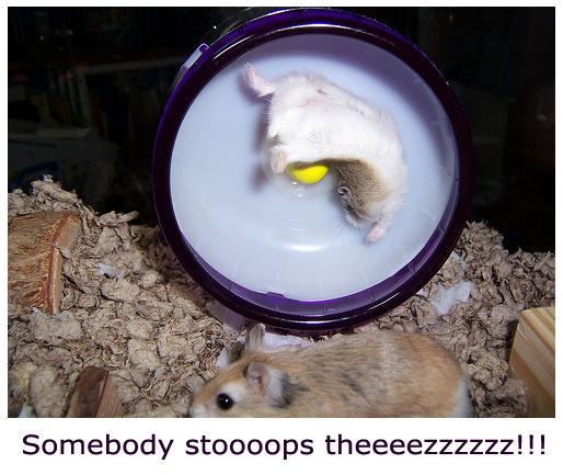 Hamster Spinning Crazy