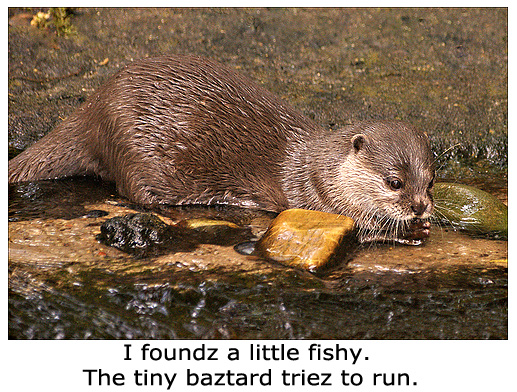 Otter Finds a Fishy