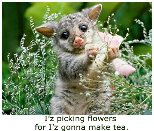 Wombat Baby Picking Flowers