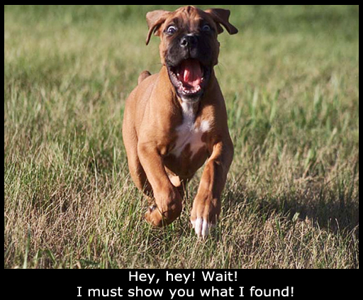 Boxer Finds Something AMAZING! (3 funny images) 1