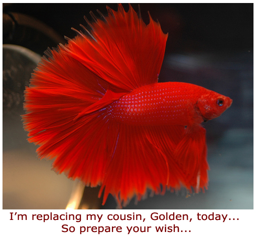 Beautiful Red Fish | Furry Talk
