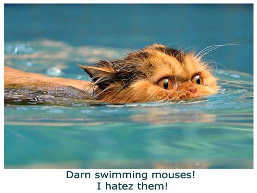 Swimming Cat - Too Funny