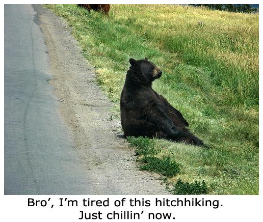 Chillin' Bear