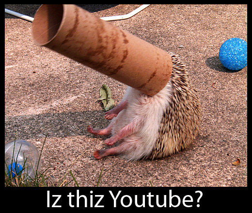 Youtube Hedgehog - Stuck