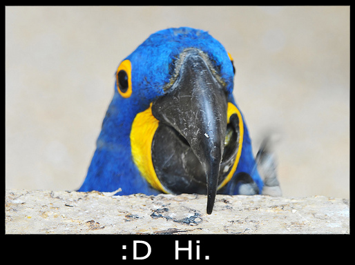 Cute Funny Bird Pictures