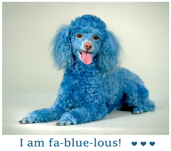 Fantastic Blue Dog - Fa-blue-lous Picture