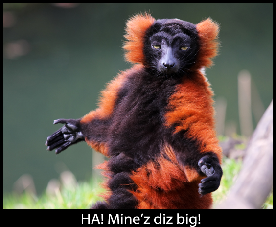 Mr. Lemur Brags About Sizes - Funny Picture