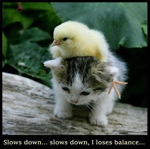 Kitten and Chick - Cute Funny Picture