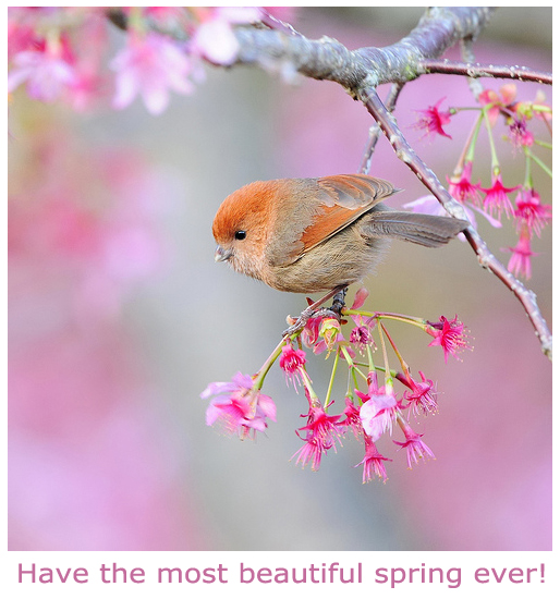 Beautiful Spring Pictures beautiful spring birdy picture (postcard) | furry talk