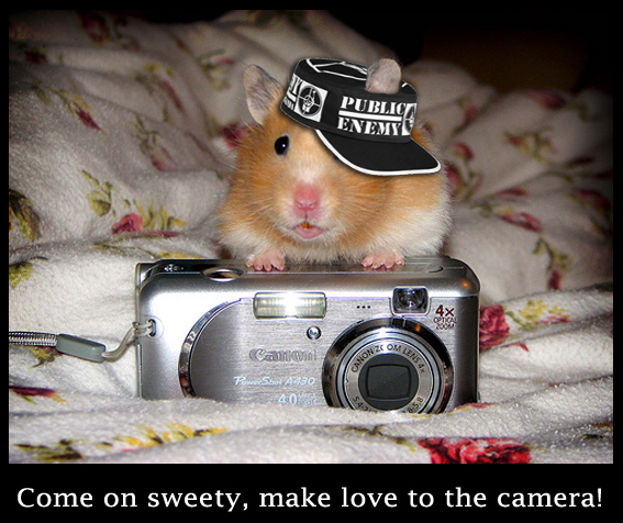 Photographer Hamster - Cute and Funny Picture