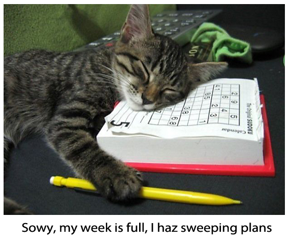 Kitty Plans to Sleep a Week Away - Funny Picture