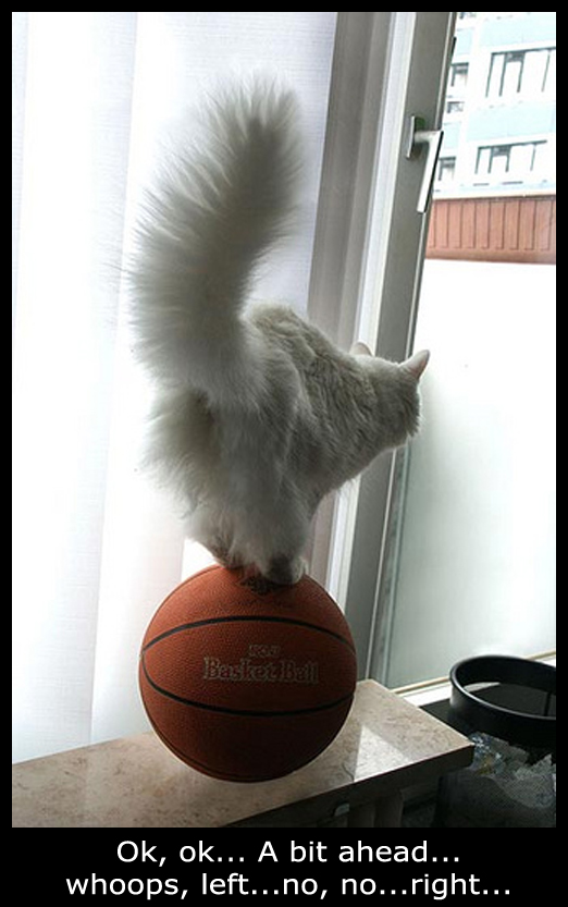 Cat on a Basketball - Funny Picture
