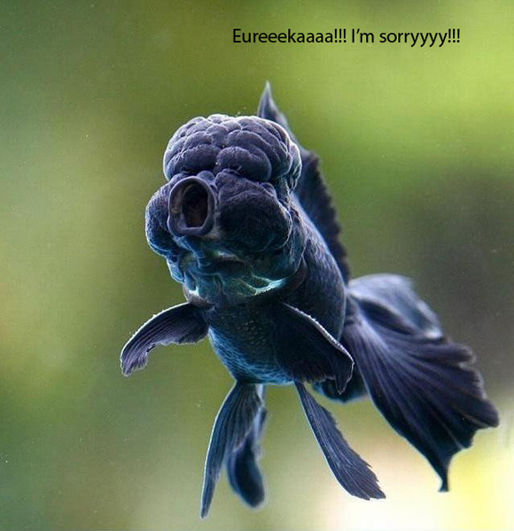 The Poor Blue Fish... - Funny Pictures 1