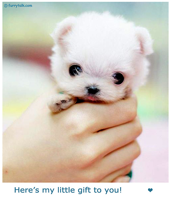 My Gift For You - Cute Puppy Picture