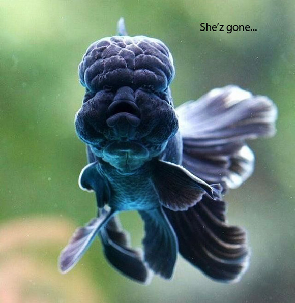 The Poor Blue Fish... - Funny Pictures 2