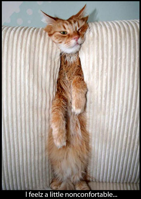 Pictures of Funny and Cute Cats 2