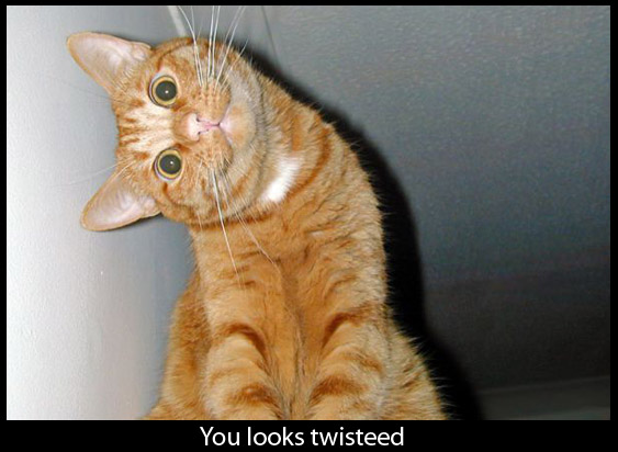 Weird Looking Cat - Funny Picture