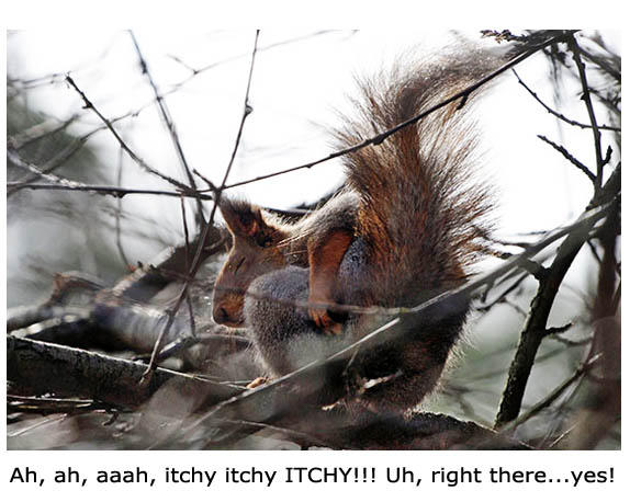 Itchy Squirrel Butt - Funny Picture