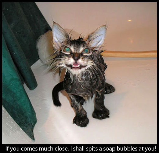 Pictures of Funny and Cute Cats 4