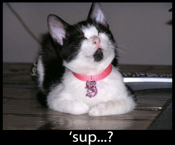 Sup Cat - Funny Picture
