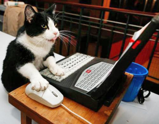 9 Signs Your Cat Has Learned Your Internet Password