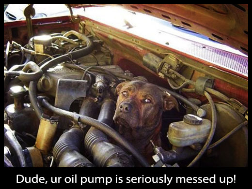 Dog Fixing a Car - Cute and Funny Picture