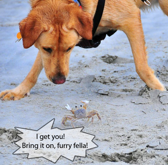 Brave Crab Attacks a Dog - Cute Funny Picture