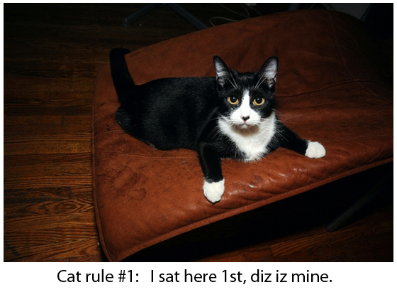 The Cat Rule - Funny Picture