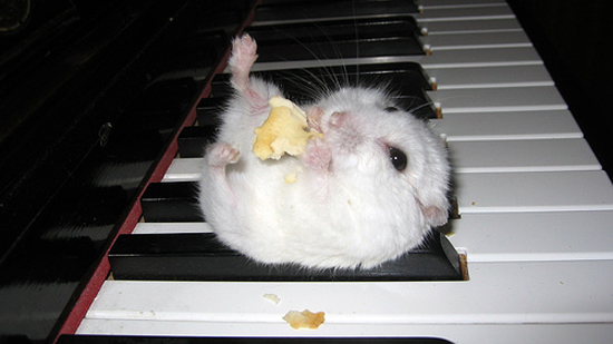 Adorable Hamsters Stuffing Food - Cute and Funny Pictures4