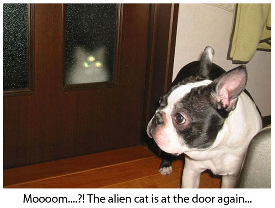 Alien Cat and Confused Dog - Funny and Cute Picture