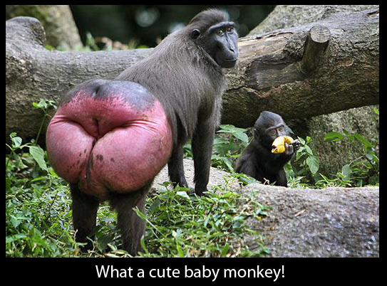 Cute Baby Monkey ( WTF... ) - Weird Picture