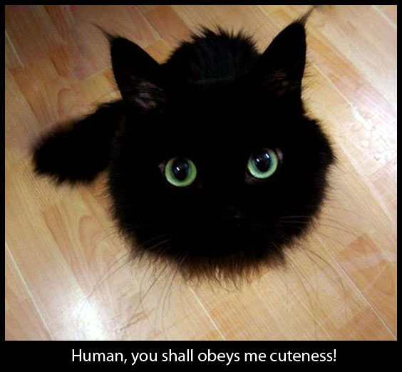 A Black Furball - Cute Cat Picture