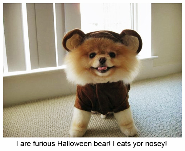 Cute Puppy in a Bear Costume for Halloween [funny picture]