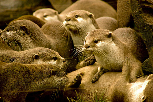 Otters are so Funny