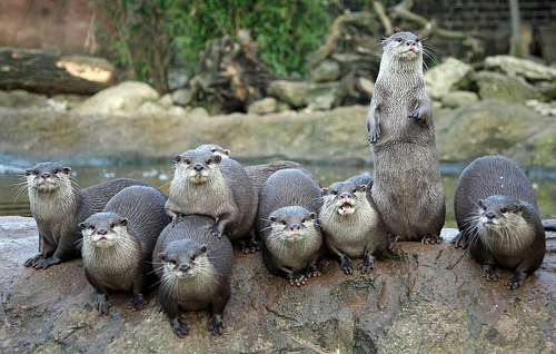 Hungry Otters