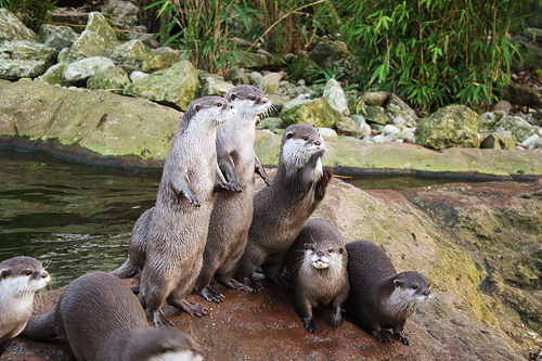 Funny Otters